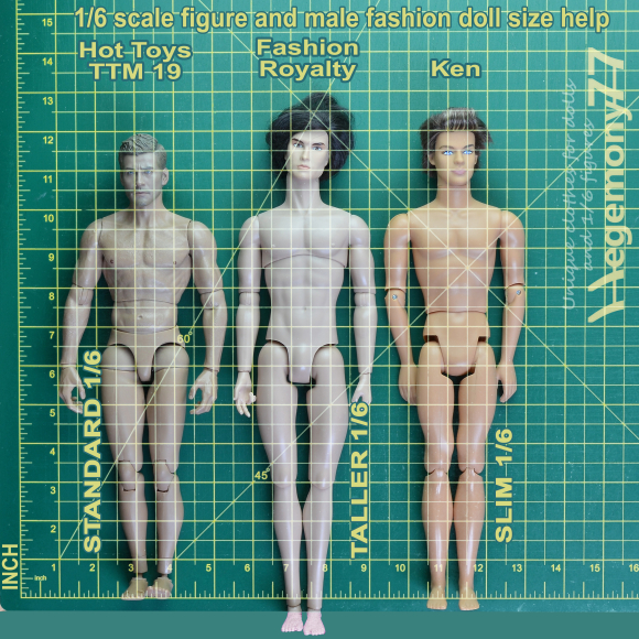 1 6 scale figure and male fashion dolls sizes help comparison photo with INCHES - standard 12 inch Hot Toys TTM 19 - Fashion Royalty Homme - Ken.jpg